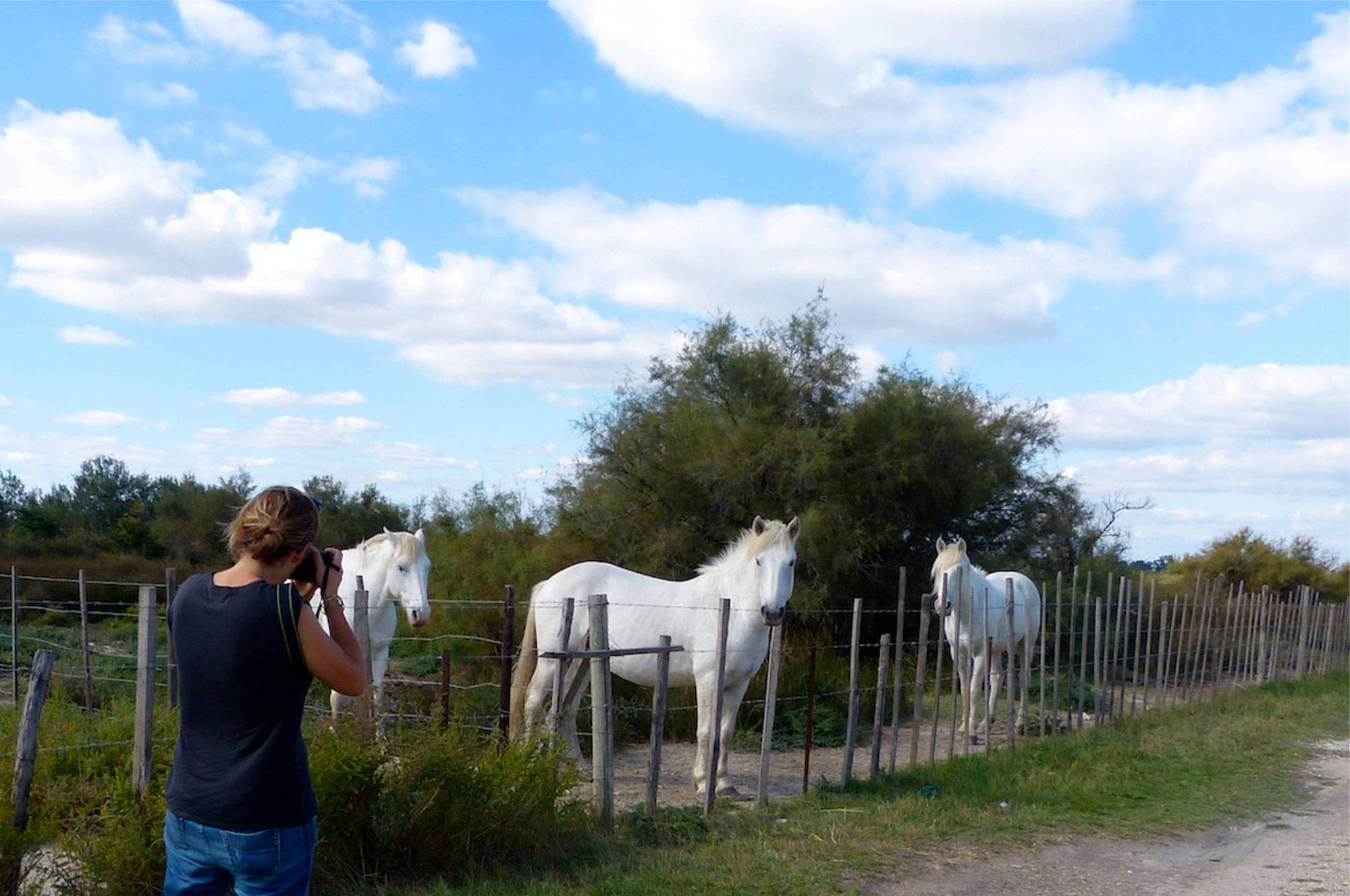 tour-camargue-caballos
