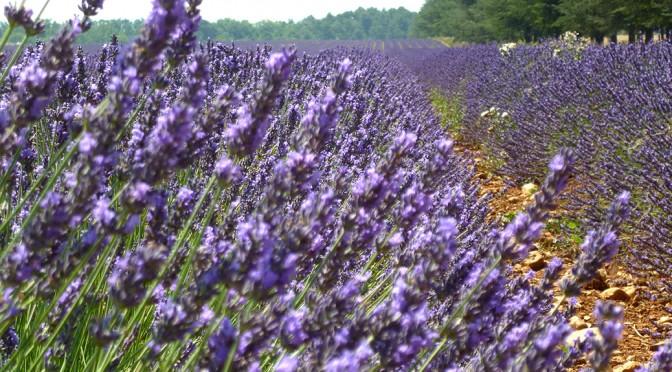 Enjoy Provence !