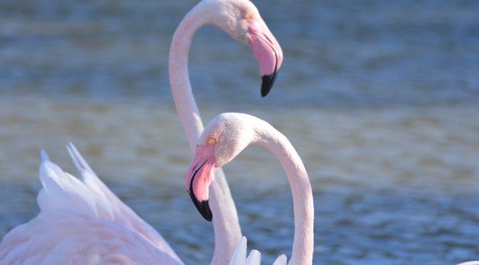 Visites guidées et observations des oiseaux