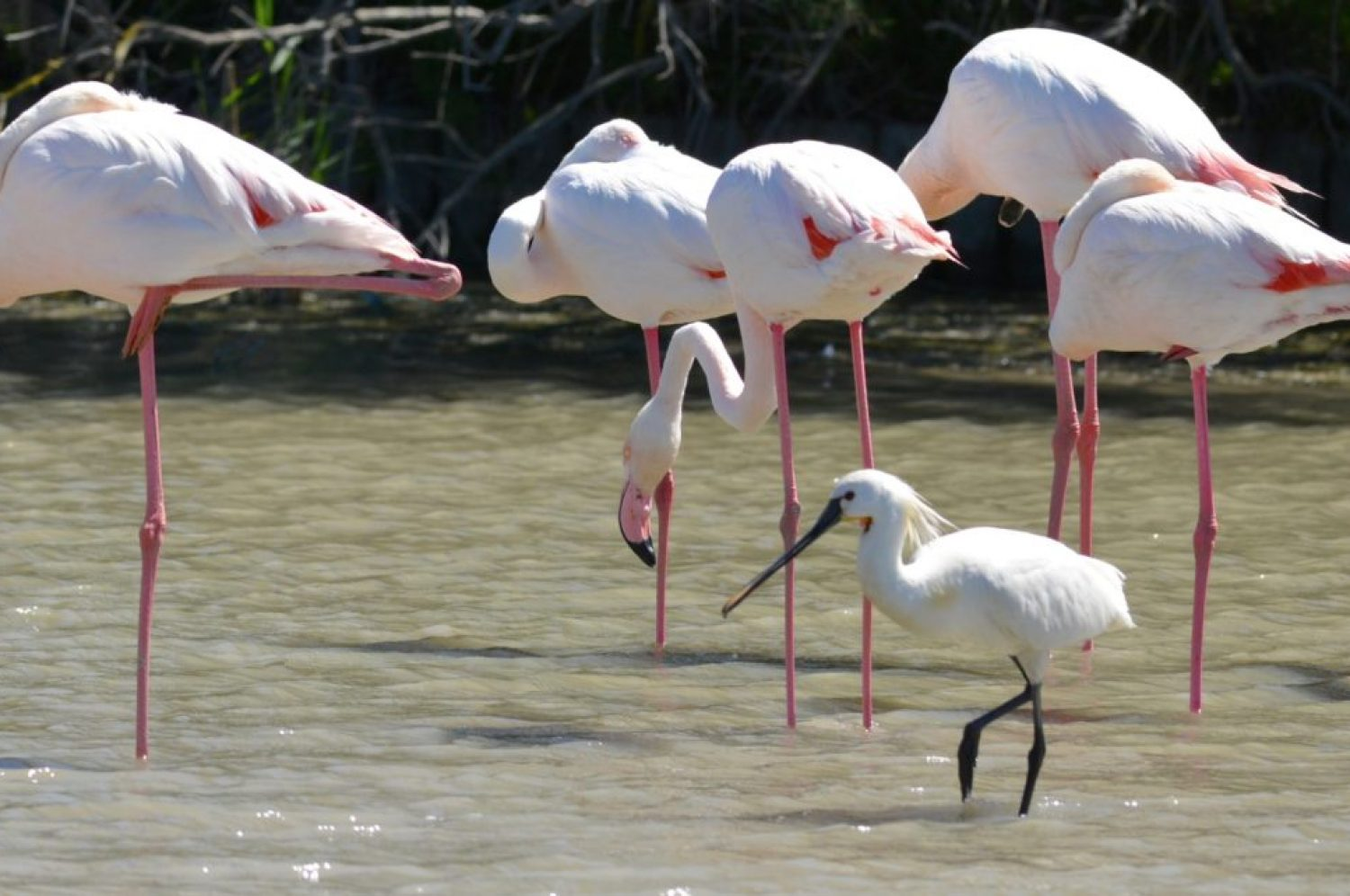 Birdwatching in Camargue