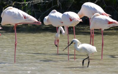 Birdwatching in Camargue