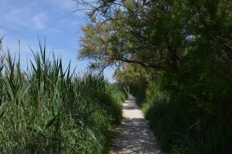 Reeds and Tamarisk