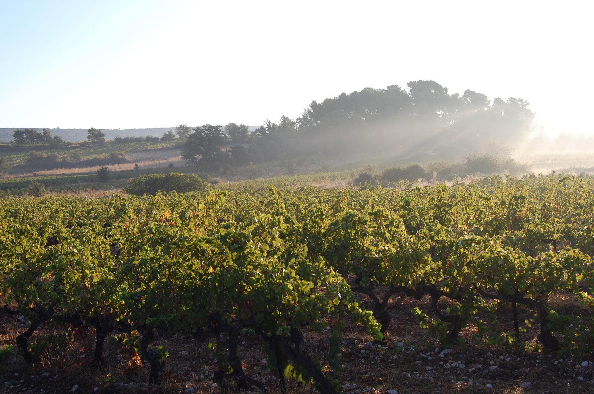 vendanges vins de Provence