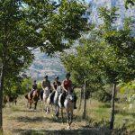 à cheval en provence