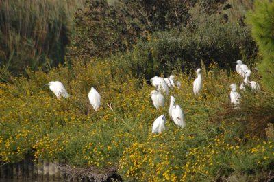 Oiseaux en Camargue